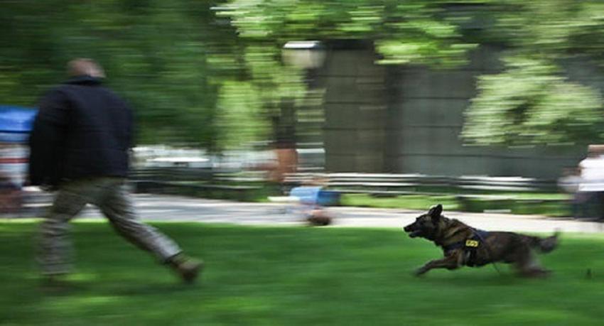 ΔΕΛΤΙΟ ΤΥΠΟΥ - Νέα επίθεση σκύλων στο Σέιχ Σου σε αθλητή