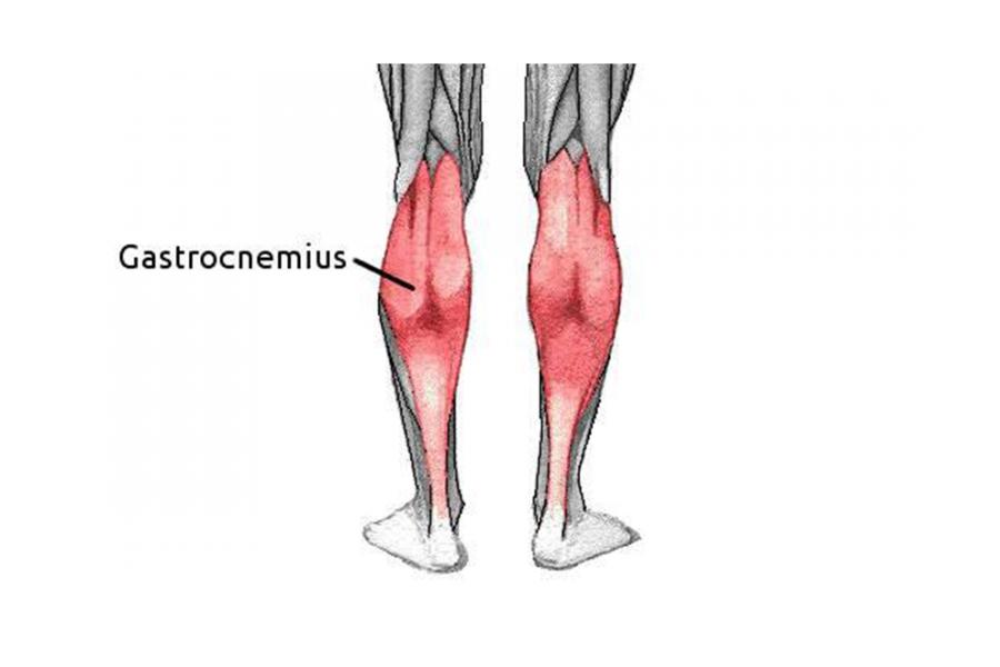 Γαστροκνήμιος μυς και ροπή αδράνειας